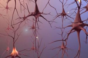 sinapsi1