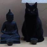 budda e gatto